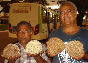 Goiás 'importa' o delicioso araticum-do-cerrado