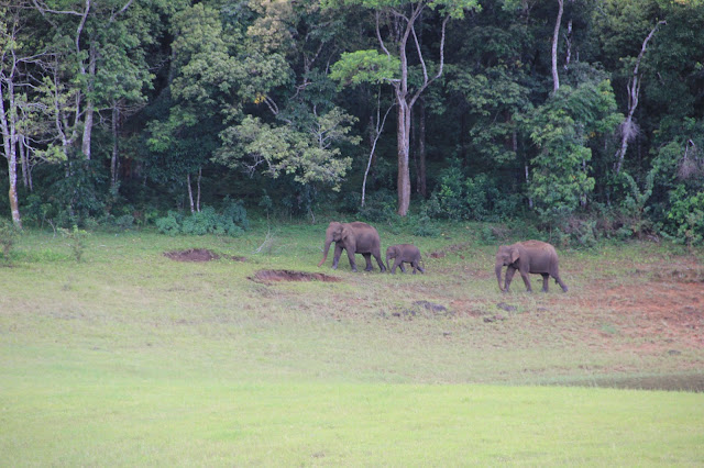 Elephants at Periyar Tiger Reserve