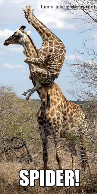 Funny Giraffe Animal Spider Photo