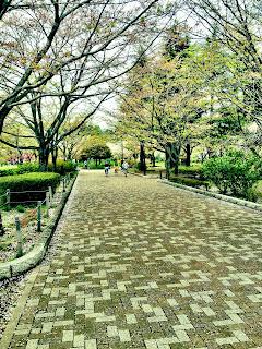 Japanese Park Sidewalk in Spring