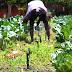 No primeiro ano de gestão, governo Flávio Dino investiu na retomada da produção e valorização da agricultura familiar