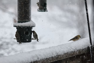 birds at feeder in snowstorm