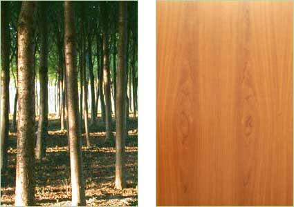 Scurire Mobili Impiallacciati : Casini legnami produzione legname da costruzione e da lavoro in