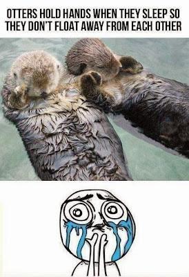 http://4.bp.blogspot.com/-IjW9q8OYWEk/UtyvdjlcKlI/AAAAAAAAC7o/jnul94pXRwo/s1600/Otters+Sleeping+While+Floating.jpg