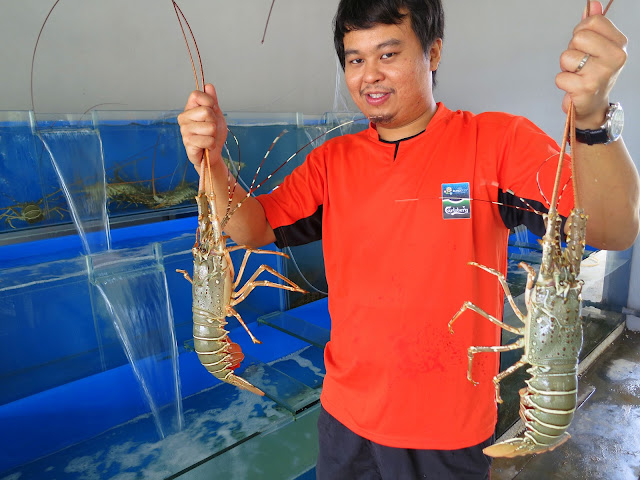 Lobster Sungai Rengit Pengerang