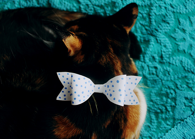 polka dot handmade bow on tortoiseshell cat
