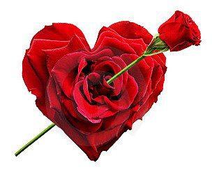 Im genes de flores bonitas vol 7 20 fotos imagenes y - Fotos de flores bonitas ...
