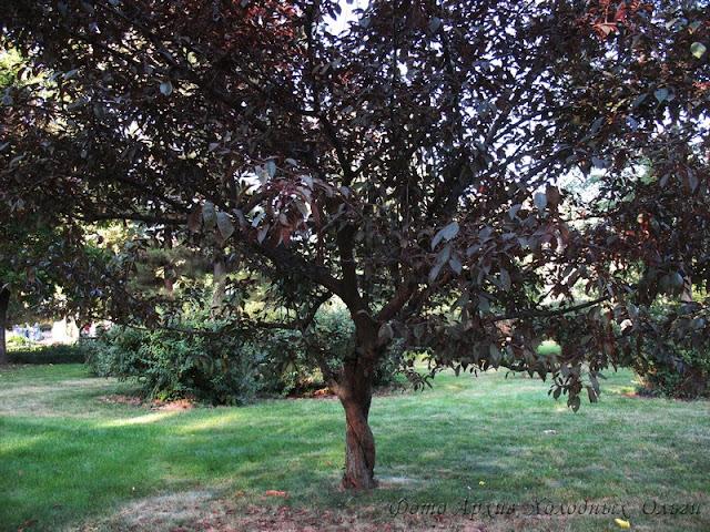 Два дерева 4