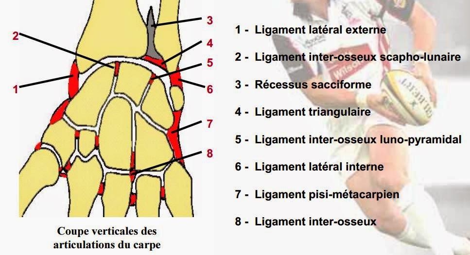 Fissure epaule