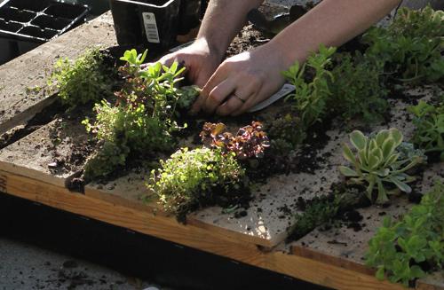 Jardineria paisajismo y creatividad verde for Como construir un jardin vertical paso a paso