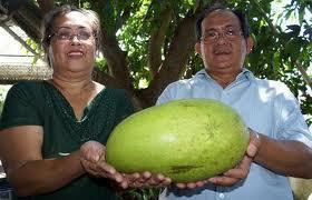 Biggest Mango
