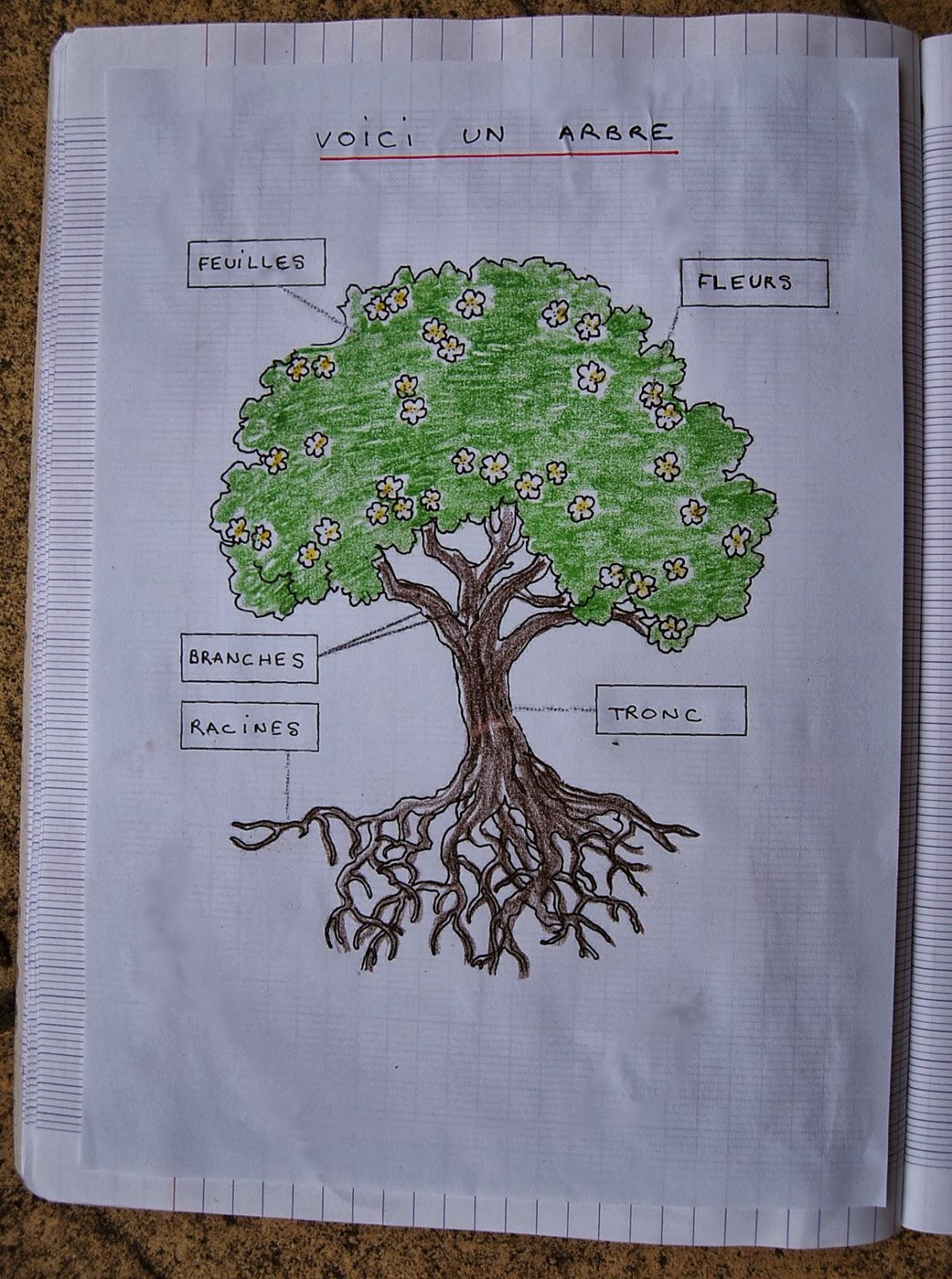 Merci qui ? MERCI MONTESSORI !: Séquence arbres et feuilles