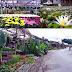 Menikmati Keindahan Wisata Bunga Cihideung