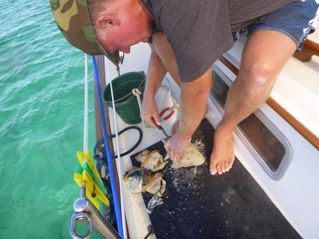 conch cleaning hog cay ragged islands bahamas
