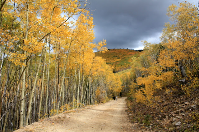 big tesuque run aspens