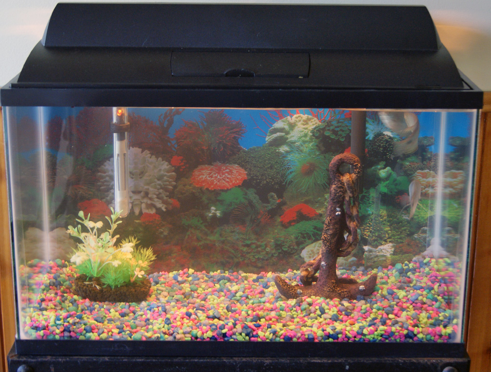 Aquarium for sale walmart total capacity of aquariums for Walmart fish supplies
