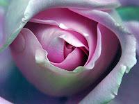 http://4.bp.blogspot.com/-IlaZ_4E1Tcc/UJbLgZbdl-I/AAAAAAAAC68/G81e2vDXVN4/s320/2.jpg