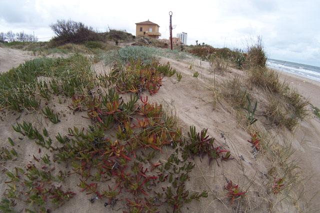 Aunque son plantas que crecen en cualquier entorno, invaden los ...