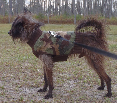 dog photo by dearmissmermaid.com