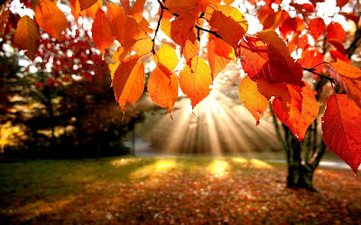 http://4.bp.blogspot.com/-Ilwac7ouaM8/Uio6j2e9yyI/AAAAAAAAFE8/V6jaFQvMkOs/s1600/autumn-leaves-trees-the-rays-nature.jpg