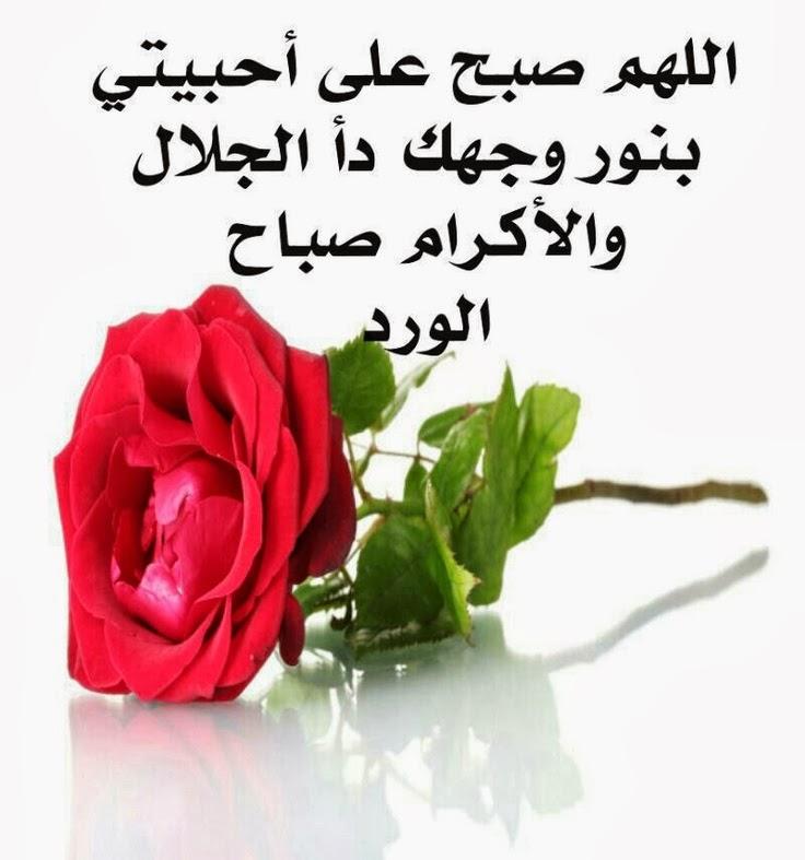 صباح الخير نظرة وورده ورحيق وكل الزوار  25fa01a471b93466a213f33176adadbf