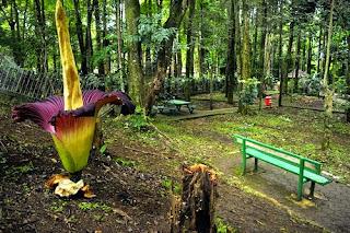 Taman Hutan Dago Pakar