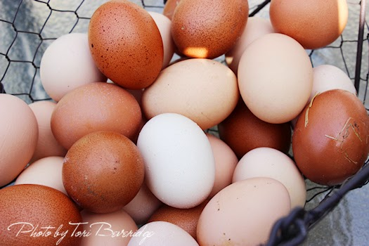 Fresh Eggs In Wire Basket Photo by Tori Beveridge