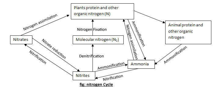Nitrogen cycle diagram labeled cycle diagram f ccuart Gallery