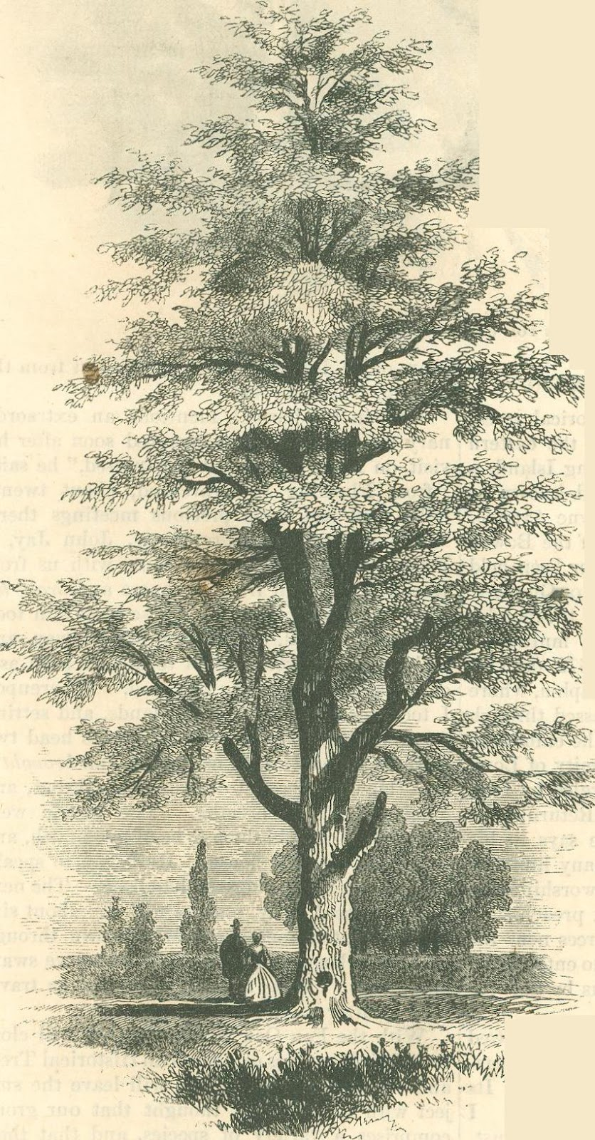 digital history project: American Historical Trees