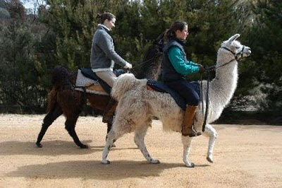 Fancy and funny riding animals