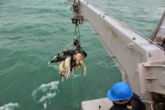 Korban AirAsia QZ8501