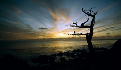 Cypress Sunset by Thomas Mangelsen