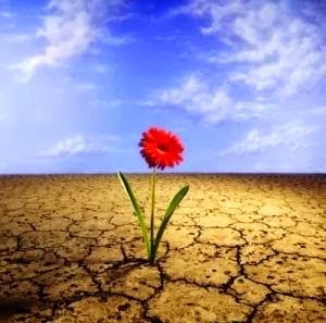 Como una flor en la adversidad