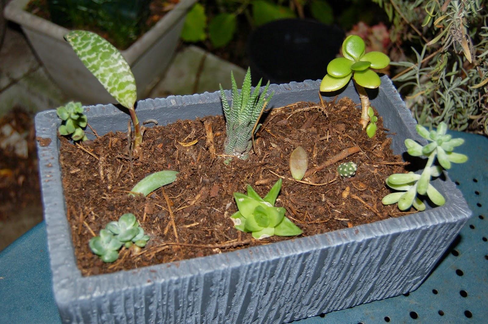 Cul de sac tarn arrivage en masse de plantes grasses for Conseil sur les plantes