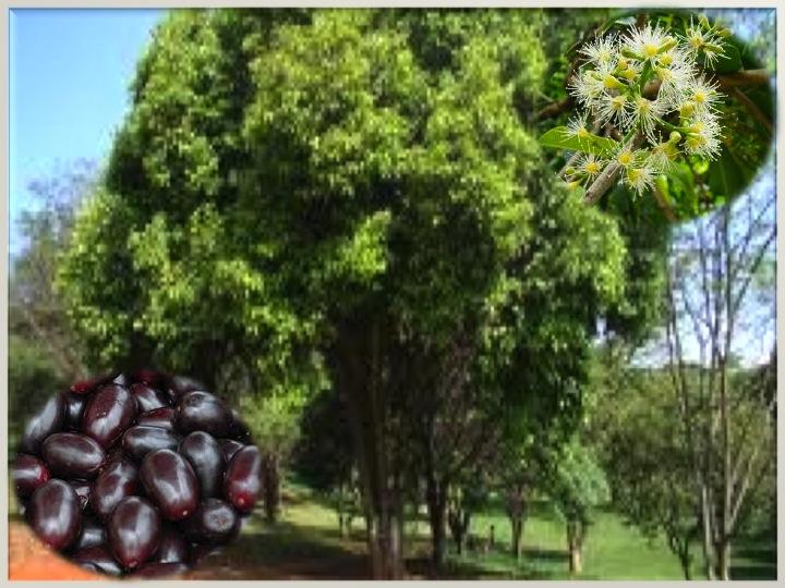 Fruta Bomba - Che Che Colé