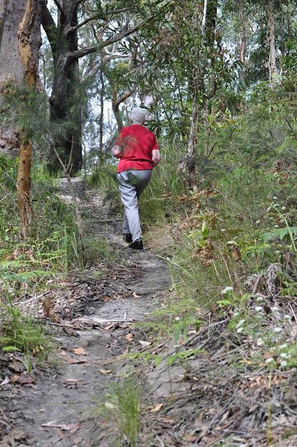 Flannel Flower Track, Rumalara Reserve
