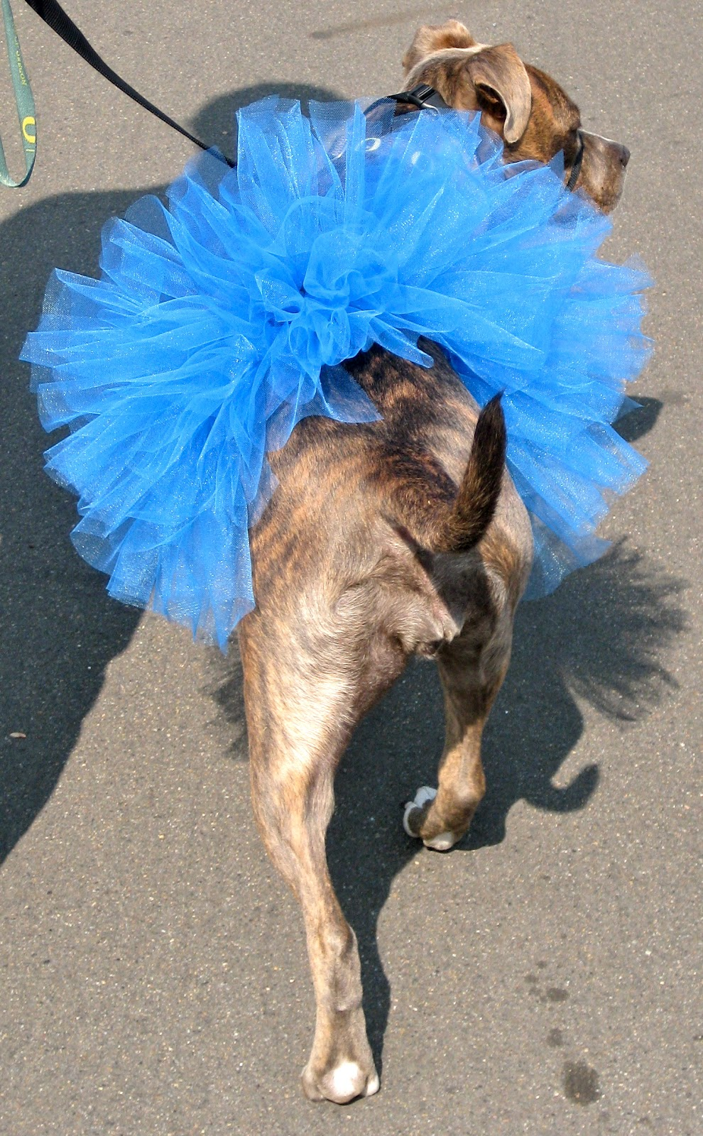 One thingu0027s for certain whatever we decide to dress Athena up as she will be wearing a tutu as part of her costume! & Pitlandia: DIY Dog Tutu Tutorial