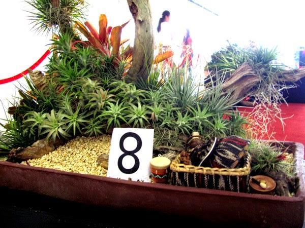 Agri Trade Fair, Bonsai, Dish Garden Exhibit, Davao City, Davao Delights, SM City Davao, Plants, Agriculture, Floriculture, Horticulture