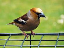 Fågeldagbok
