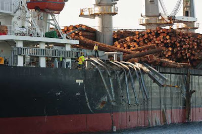Going Rogue: Giant Wave Damages Cargo Ship In Pacific Northwest