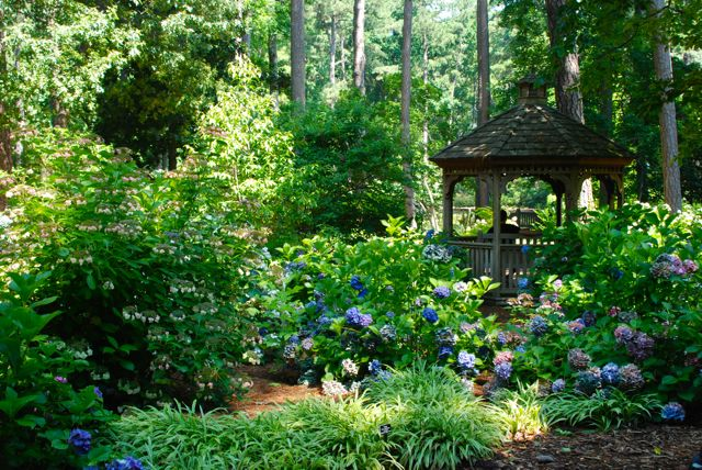 A little gazebo is used as a focal point in the hydrangea garden.