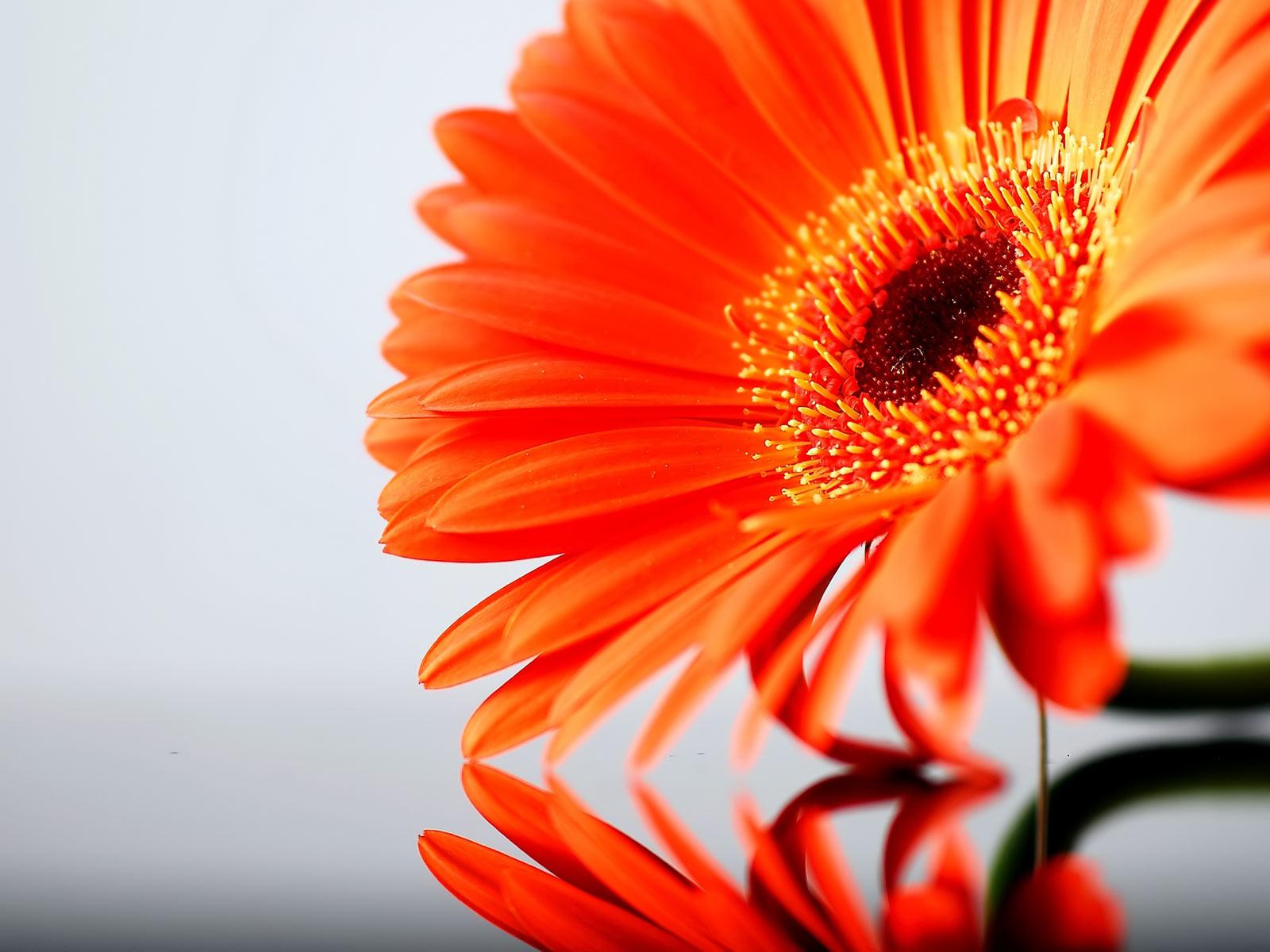 download image orange and - photo #33