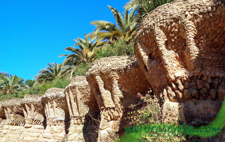 detalle de la terraza de palmeras