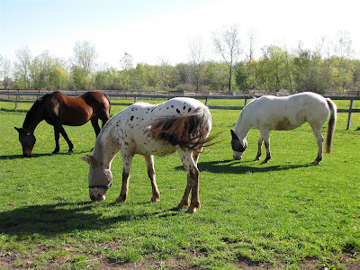 country Horses grazing wallpaper
