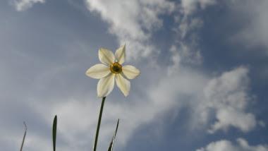 S-astepti asa...ca o floare...