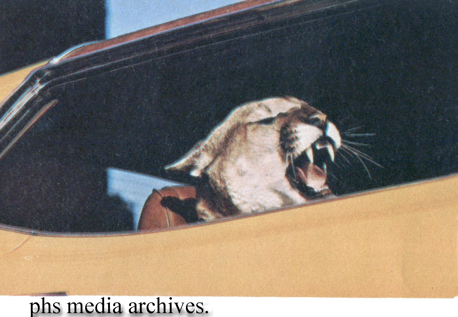 Promofile at the sign of the cat mercurys cougar logo promofile at the sign of the cat mercurys cougar logo publicscrutiny Gallery