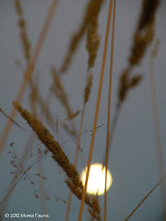 A Samhain Season Moonrise.