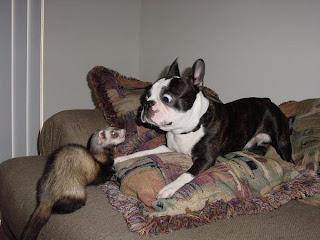 Cão espantado com bicho estranho