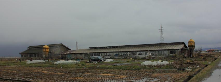 豚舎in亀田