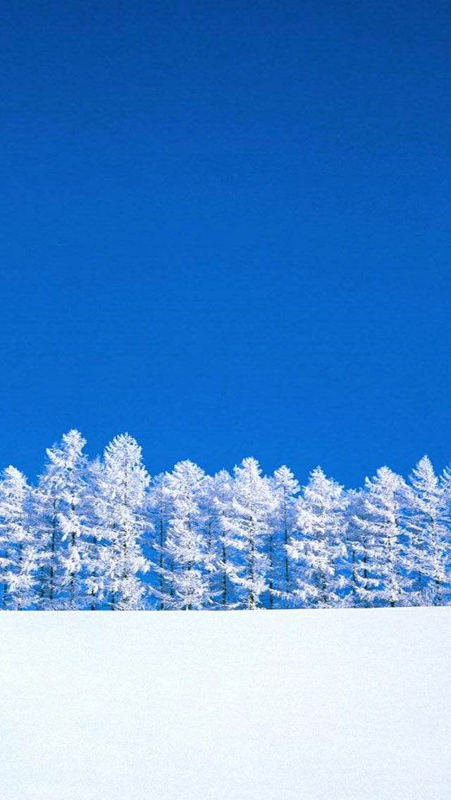 雪原と木々